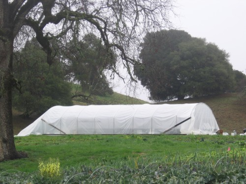 greenhouse with plastic on