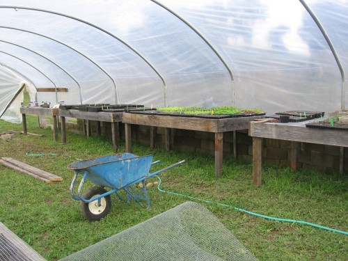 greenhouse with tables and propagating plants