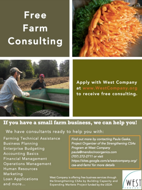 Consulting Flier
