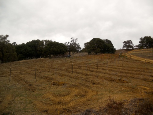 While the Golden Vineyards crew are off on Sunday, we can borrow the tractor. This is the future fruit orchard and table grape vineyard getting subsoiled.